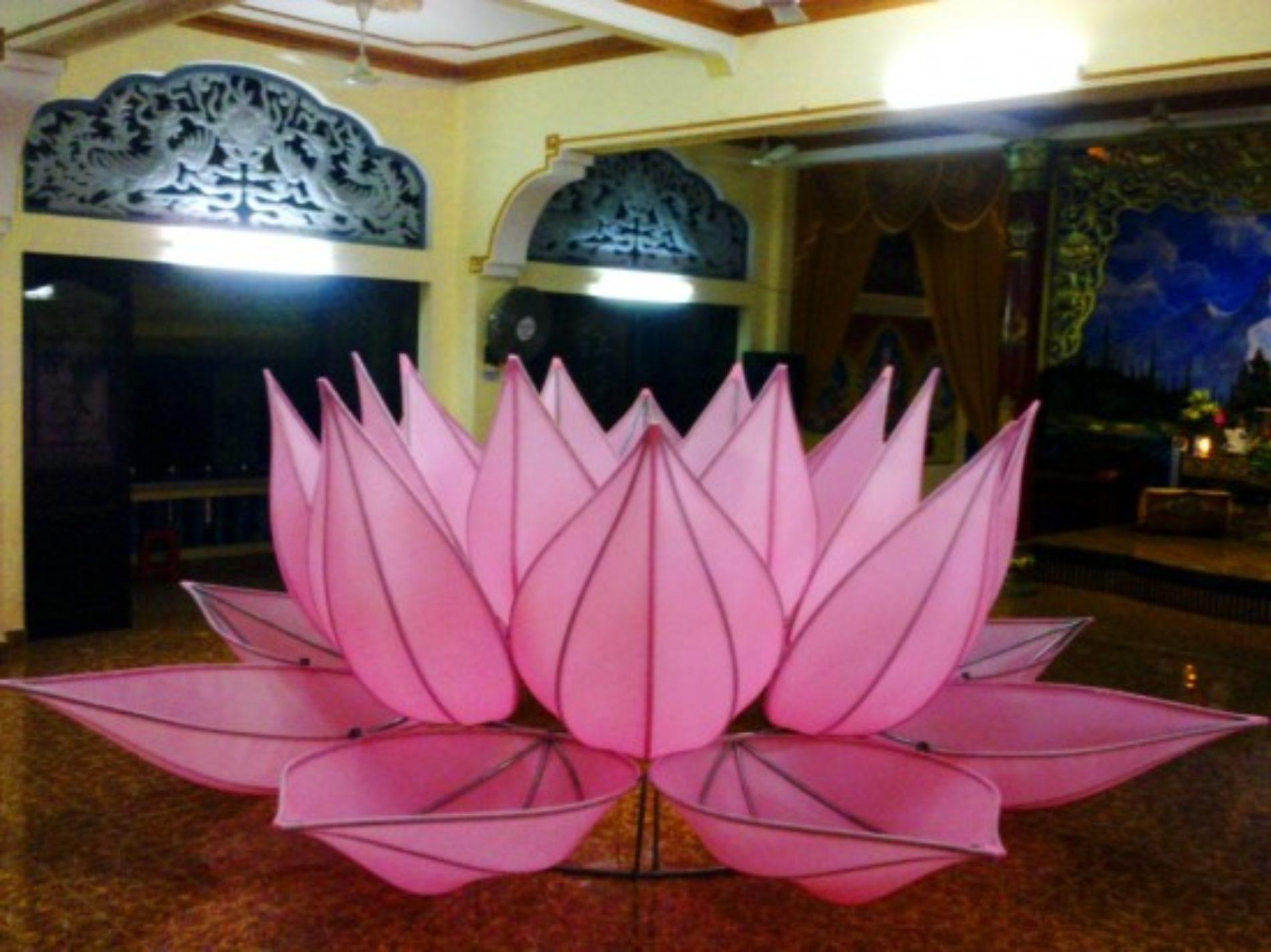 Bảy Đóa Sen Hồng trên kênh Nhiêu Lộc: Nhiều duyên lành hội tụ